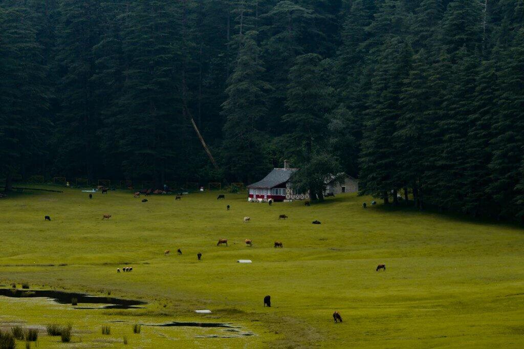 Khajjiar Ground near Dalhousie, Himachal Pradesh