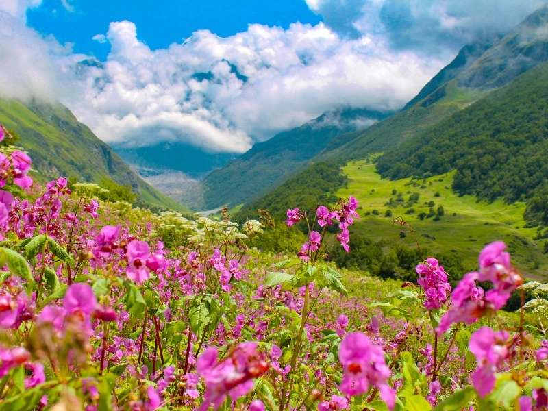 Valley of Flowers, Uttarakhand - Places for nature lovers