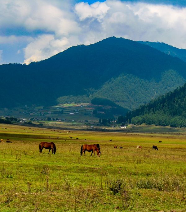 Phobjikha Valley - Bhutan Packages