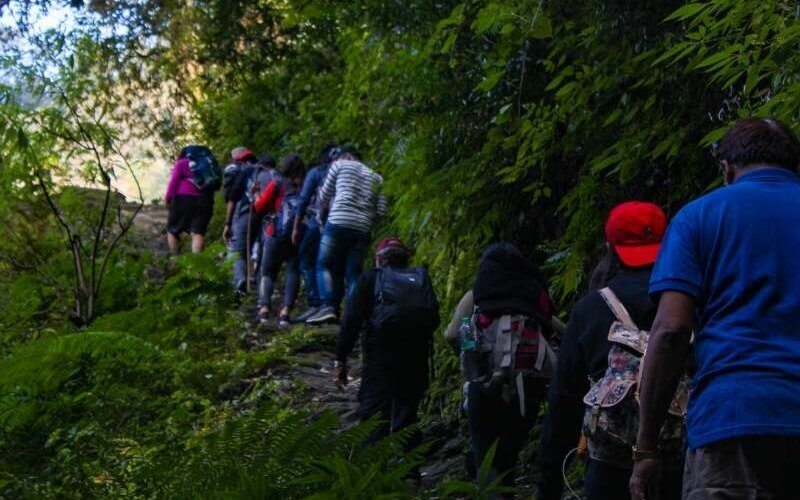 Forest Trail of Prashar Lake Trek