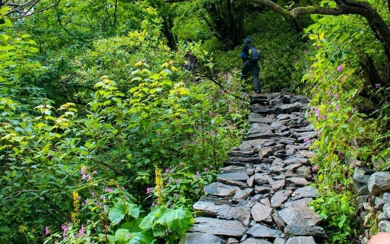 Trail from Ghangharia to Valley of Flowers