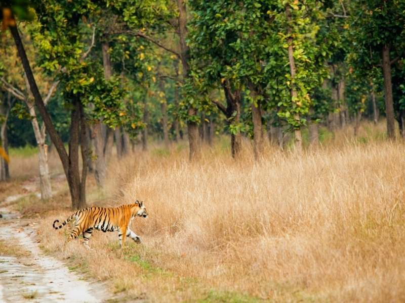 Bandhavgarh National Park - Offbeat Places in India