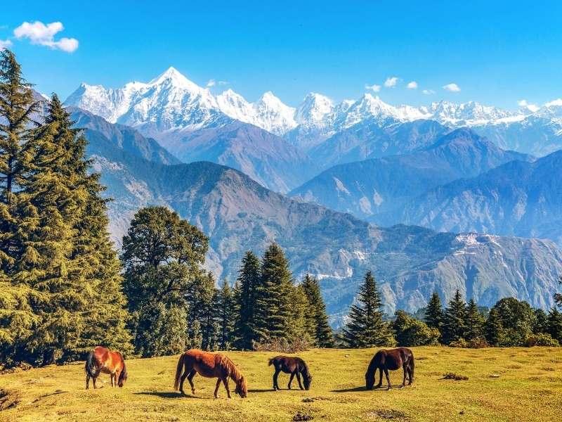 Munsiyari in Pithoragarh, Uttarakhand - Offbeat Places in India