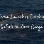 Dolphin Safari in Ganga