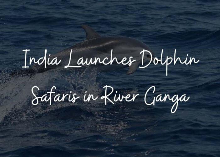 Dolphin Safari in Ganga